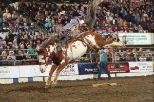 roughstock rodeo broncs 2